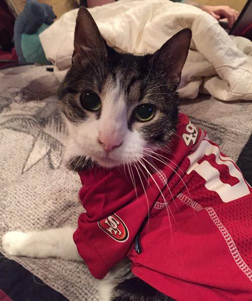 49ers quarterback Colin KATpernick cat jersey costume