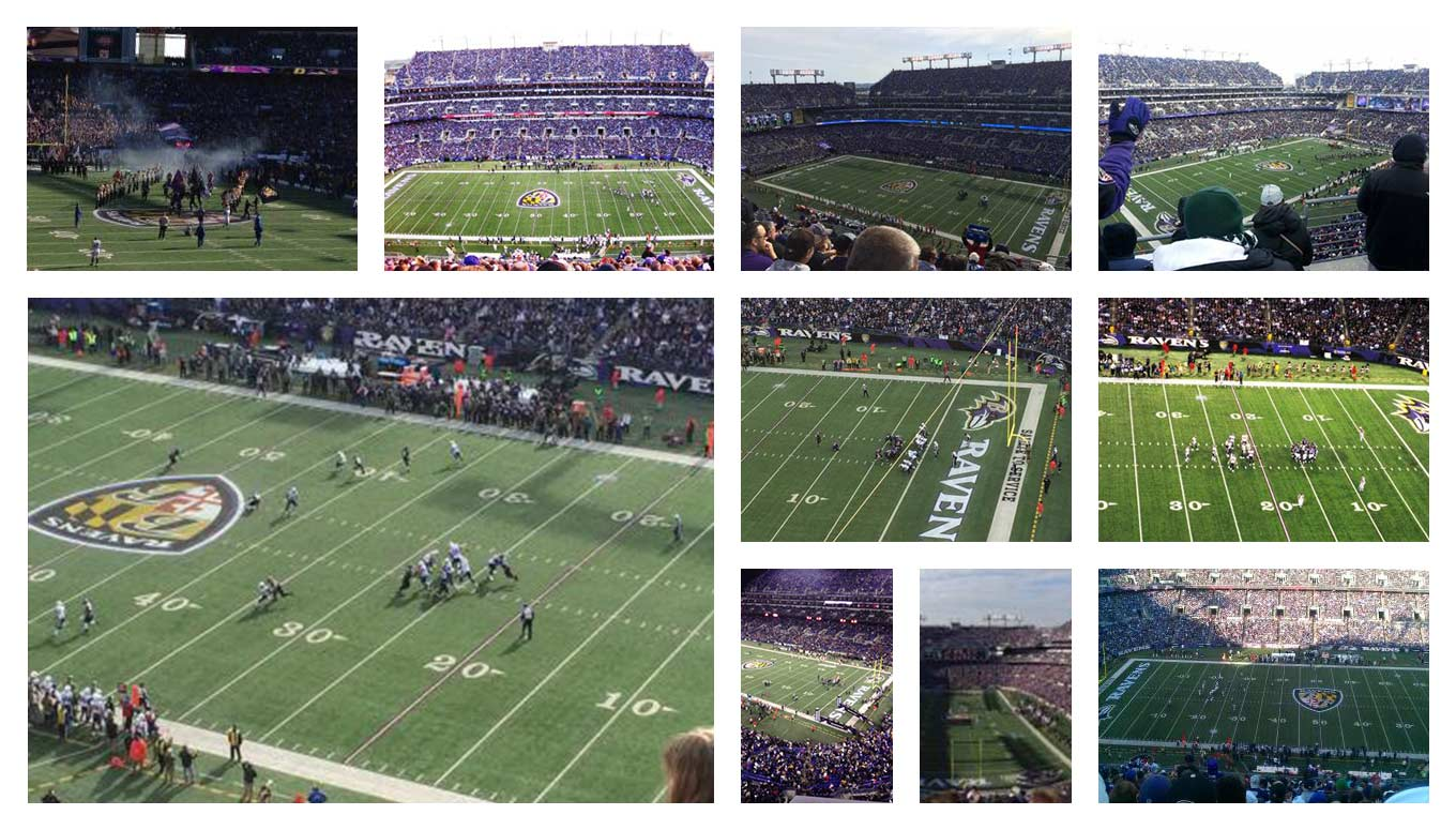 A Flock of their Own: Fandom and the Baltimore Ravens