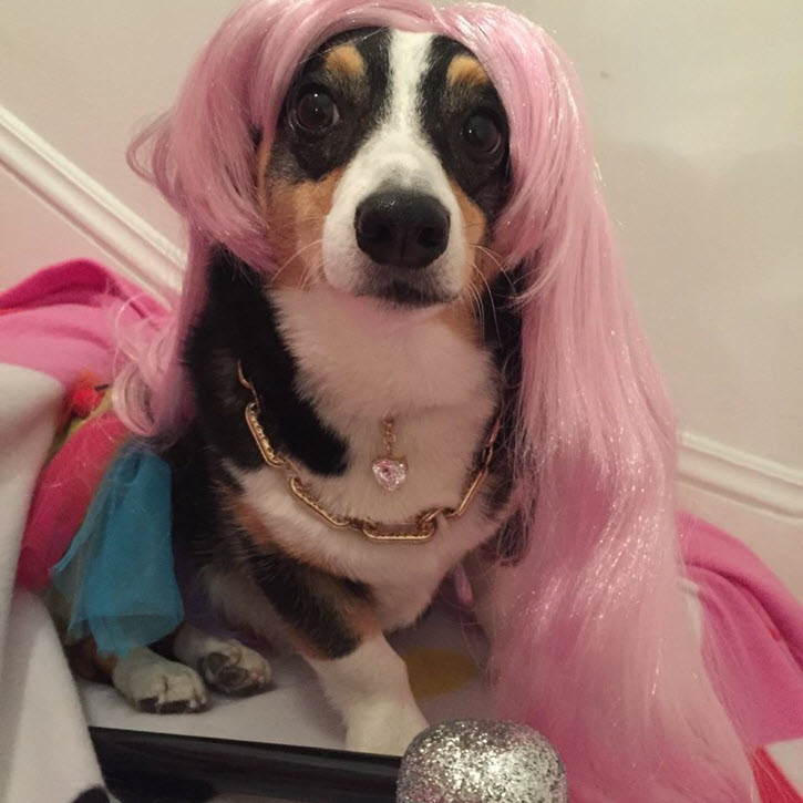 15 Adorable Pets Dressed Up Like Live Entertainment Stars